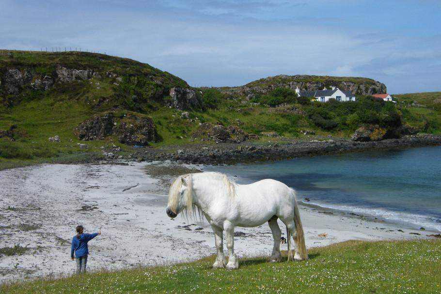 isle_of_muck_horses
